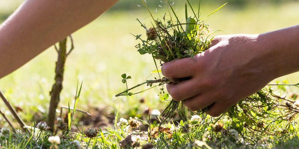 weeding-out-unworthiness