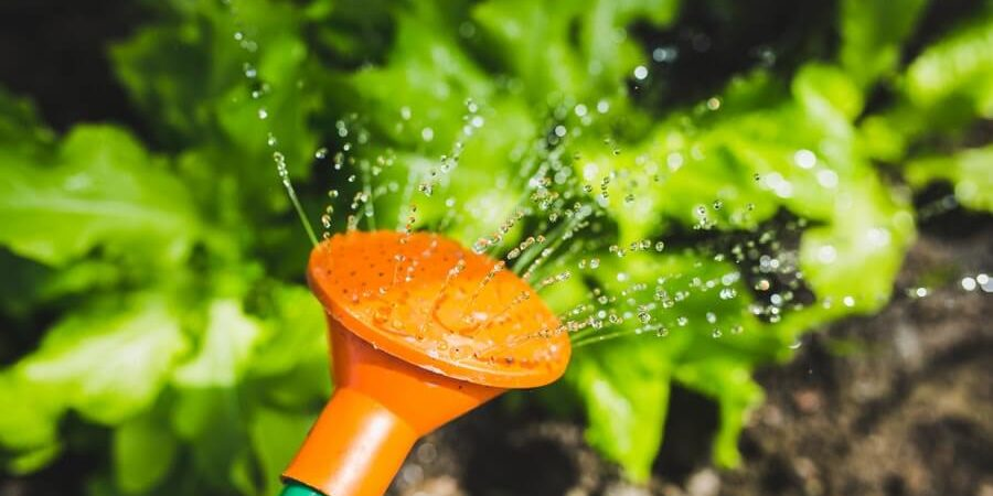 watering can - weekly challenge - 031019
