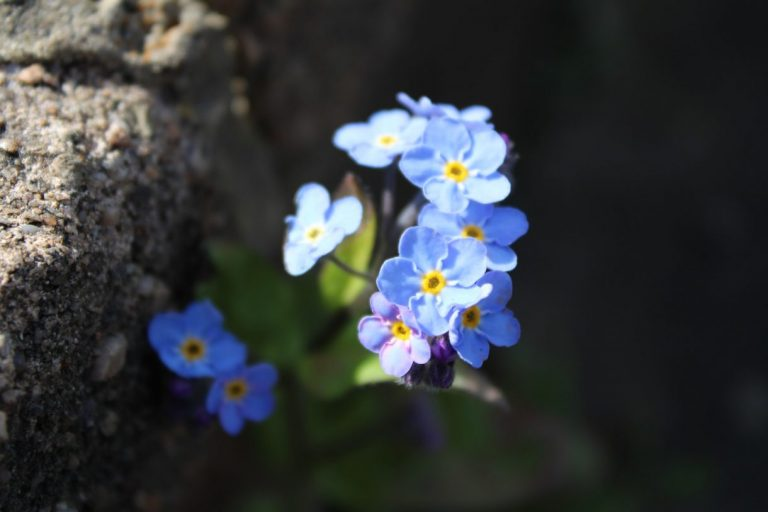 Flowering - Linda Buckmaster