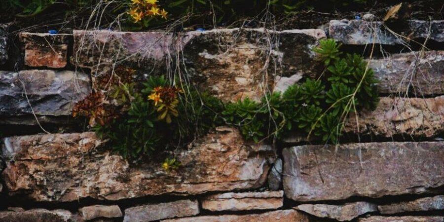 Flowering-Linda-Buckmaster